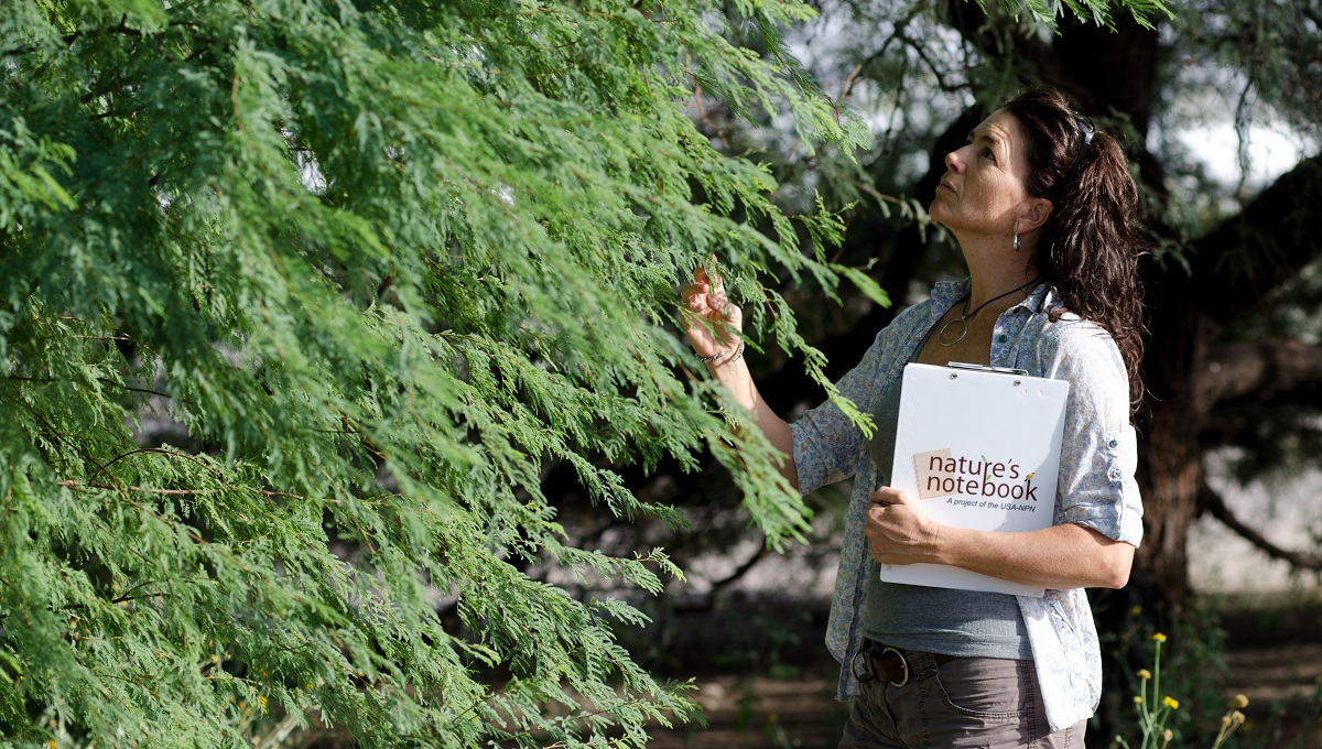 Woman observes the leaves of a tree