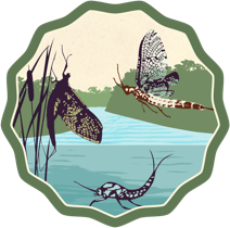 Mayfly Watch badge