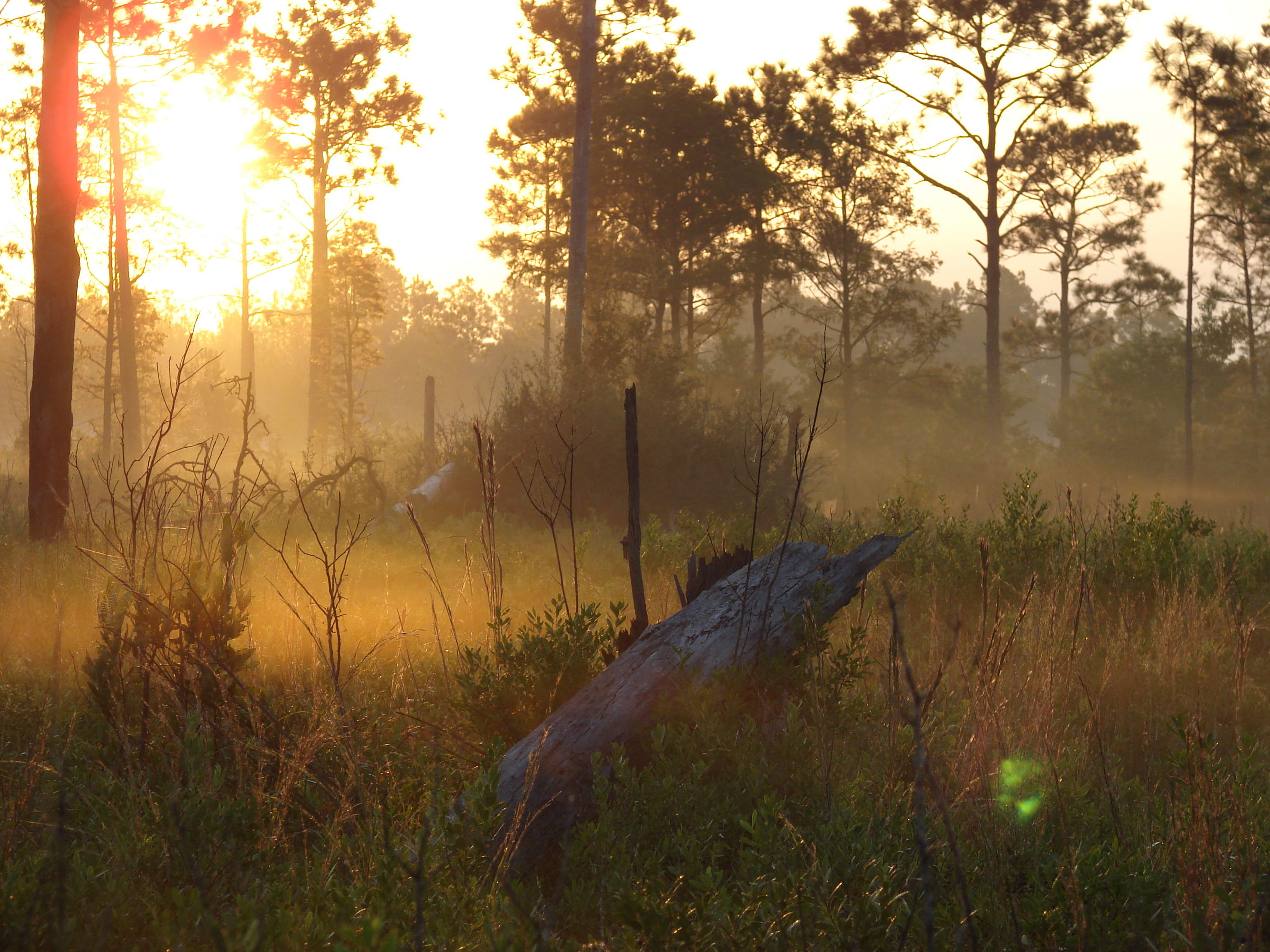 Sunrise at Grand Bay NERR/NWR