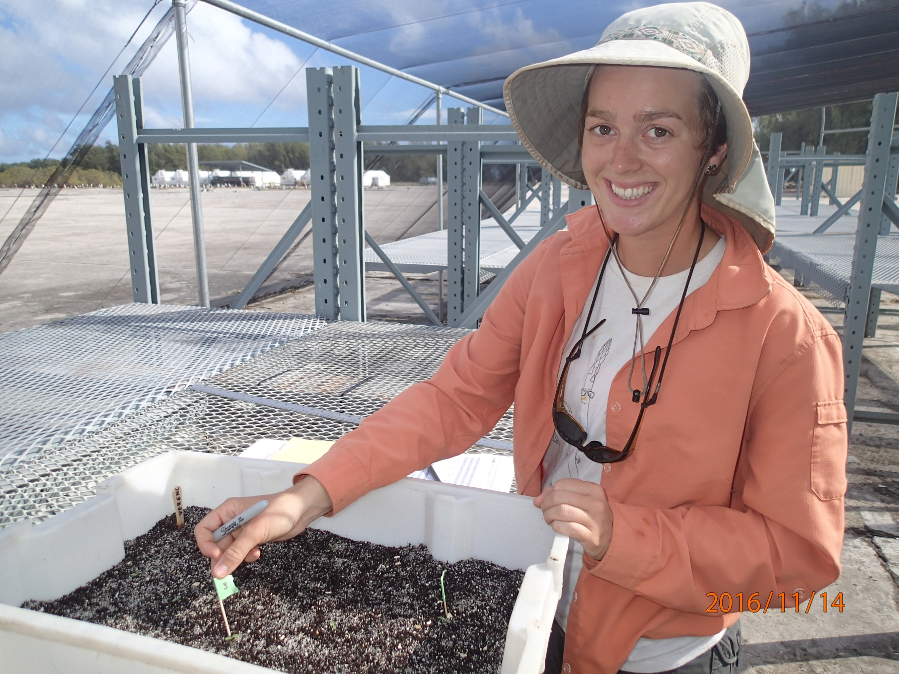 Wieteke Holthuijzen with plant tray at Midway Atoll National Wildlife Refuge